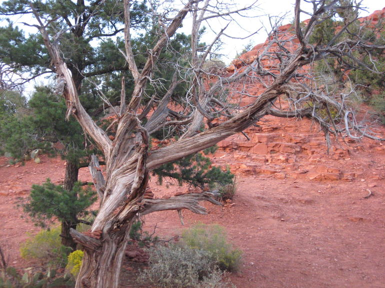 Copy (1) of IMG_0040 - Sedona