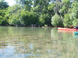 Photo of Key West Key West Island T'ing: Sail, Snorkel and Kayak Adventure kayaking around island