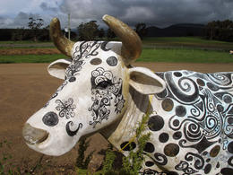 There were quite a number of cow sculptures at Ashgrove Cheese Farm which was one of our stops on the way back. Slightly tacky, but good fun. , David C - December 2010