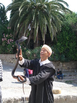 Photo of Costa del Sol Tangier, Morocco Day Trip from Costa del Sol Playing with a cobra in Morocco