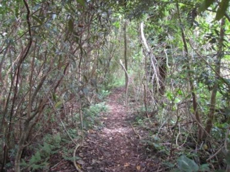 A Trail Under the Canopy - Oahu