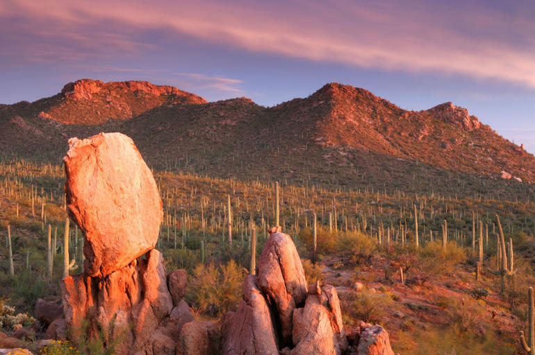 Sonoran Desert - Saguaro National Park, Arizona - Phoenix