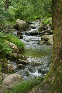Beautiful babbling brook on the trail to the lakes, Kevin G - August 2009