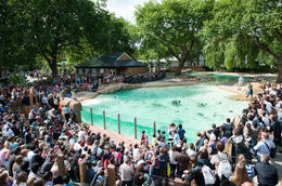 Photo of London Skip the Line: London Zoo Tickets ZSLpenguinbeach-11.jpg