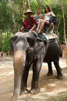 Great Elephant ride! , Natalie B - July 2011