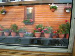 This is just one of the many lovely houseboats that line many of the canals of Amsterdam. Some are derelicts but many are very nice with plants and trees in pots making them look as though they are..., LYNN L - June 2011