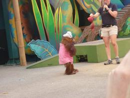 Animal actors show at Universal Studios., Ivo P - October 2010