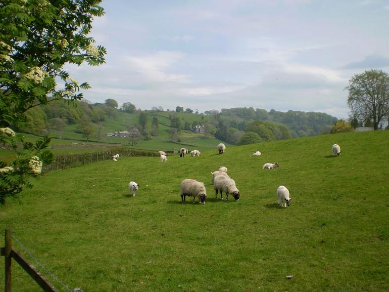 Beautiful meadows of the lake district. - Lake District