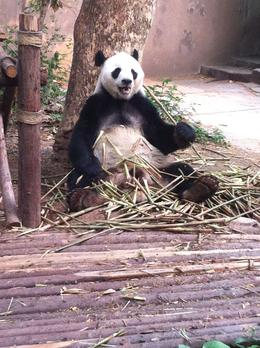Photo of Chengdu Half-Day Chengdu Panda Breeding Center Tour with Optional Baby Panda Holding Life is good
