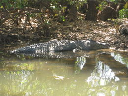 Photo of Darwin 2-Day Kakadu National Park Yellow Waters Cruise, Aboriginal Art Sites and Arnhem Land Tour from Darwin Yellow Waters
