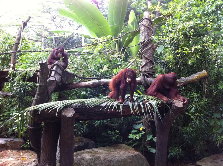 Breakfast with the Orangutans - Singapore