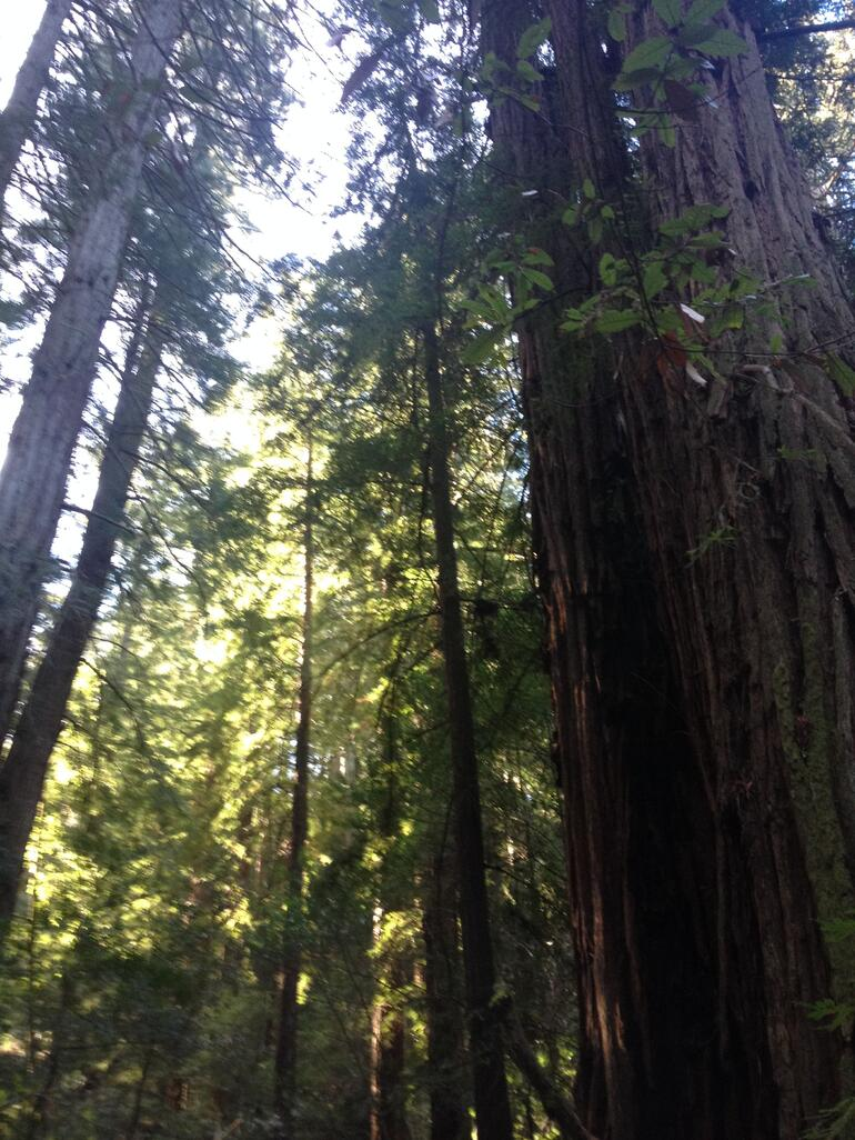 Muir Woods and Wine Country - San Francisco