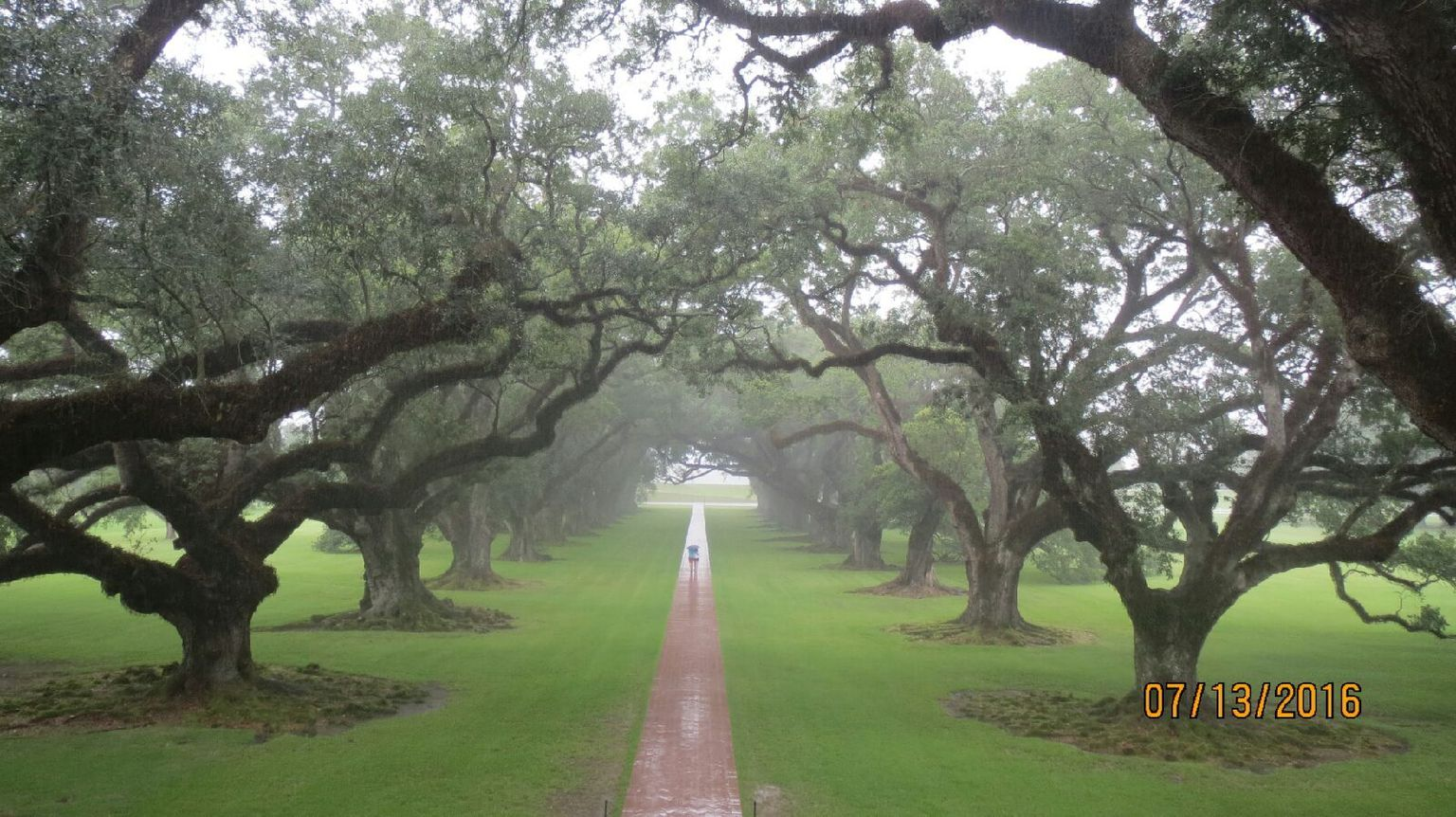 Oak Alley and Laura Plantation Tour with Transportation from New Orleans