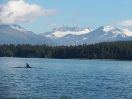 Photo of Juneau Juneau Whale Watching Adventure and Mendenhall Glacier Tour 100_1010