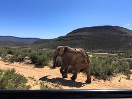 The elephants got a little up close and personal! , Amberly M - October 2015