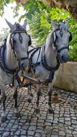 Photo of Lisbon Sintra and Cascais Small-Group Day Trip from Lisbon Horses in the village outside of Sintra