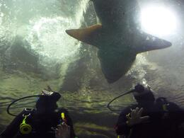 I'm on the left as the shark decided to swim directly above us, it was hard not to just reach out and touch the beast., Jennifer B - October 2010