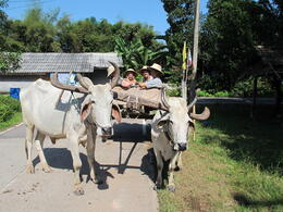 Our ox and cart ride. It was quite relaxing...such a different pace to or normal mode of transport! , Jill - November 2011