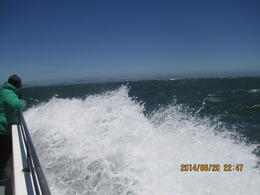 Photo of San Francisco Whale Watching & Wildlife Eco Tour from San Francisco Speed