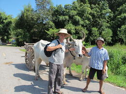 Photo of Bangkok Khao Yai National Park and Elephant Ride Day Trip from Bangkok Dave and Driver