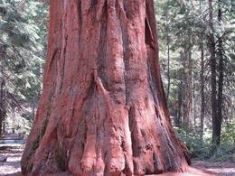 Photo of   Red Woods