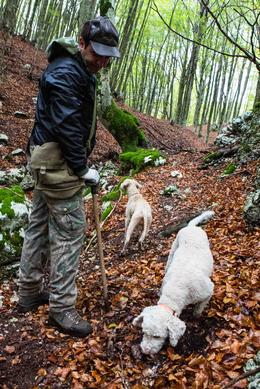 Photo of Naples Private Tour: Truffle-Hunting Experience from Naples with Lunch Truffle hunting experience