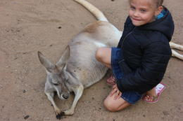My daughter Ashley patting a kangaroo , More s - October 2014