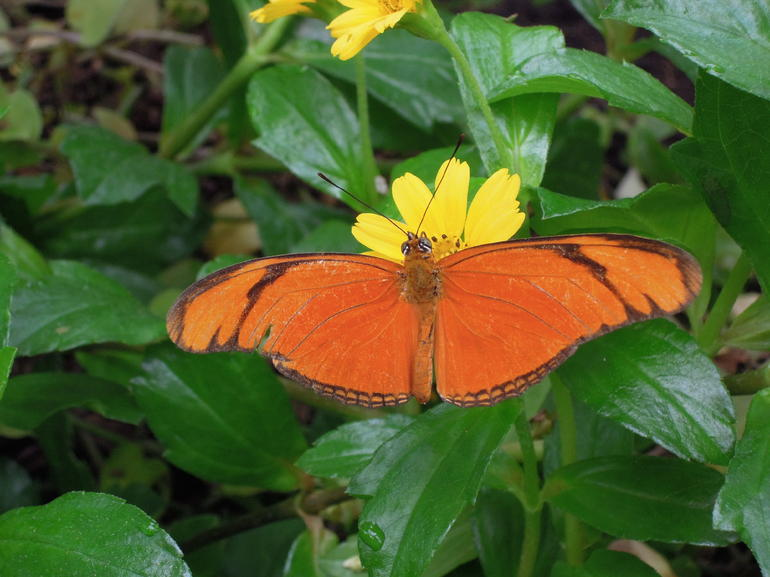 Beautiful Botanic Garden Butterflies - Amsterdam
