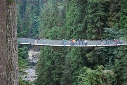 Photo of Vancouver Vancouver Shore Excursion: Pre- Or Post-Cruise North Shore Tour Capilano Suspension Bridge