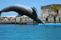 Photo of Puerto Plata Ocean World Dolphin Swim Dolphin Show at Ocean World