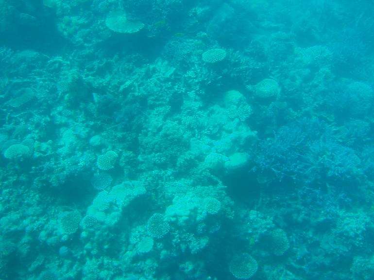 GreatBarrierReef - Cairns & the Tropical North
