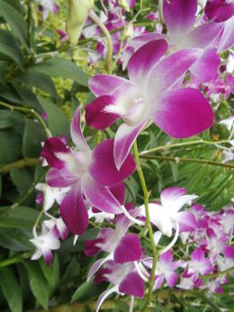 Photo of Singapore Singapore City Tour with optional Singapore Flyer Orchids