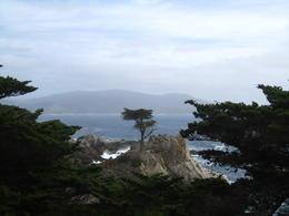 Photo of San Francisco Monterey, Carmel and 17-Mile Drive Day Trip from San Francisco The Lone Tree