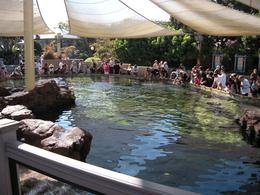The touch pool - October 2009