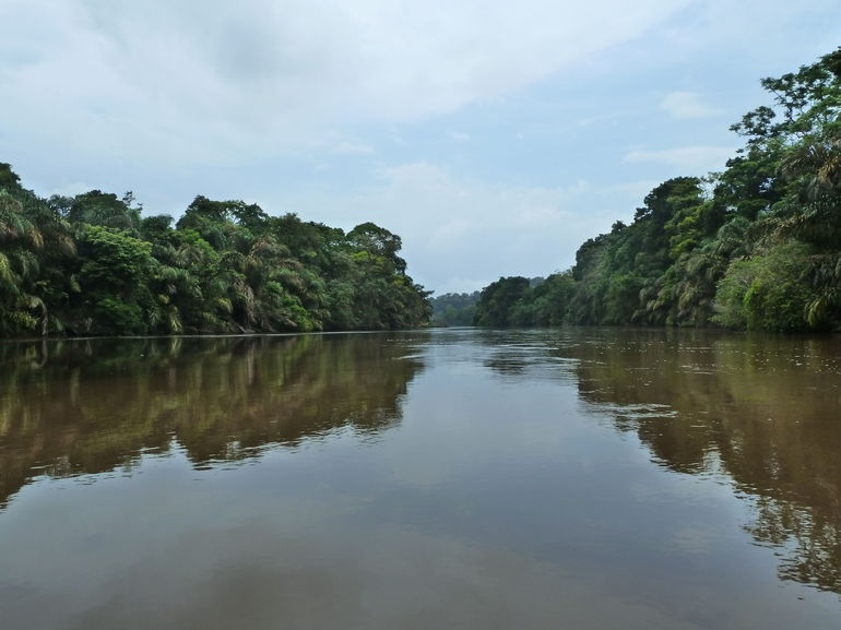 Picture taken during boat ride at Tortuguero National Park