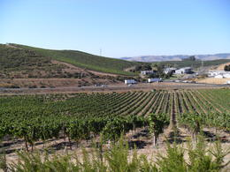 1st Vineyard on the tour - small but perfectly formed ! , Donnie - October 2011