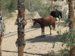 Wild horses - they were harmless!, Mo Burns - August 2011