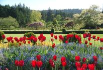 Photo of Vancouver Vancouver to Victoria and Butchart Gardens Tour by Bus