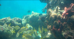 This was pretty cool - all natural coral and fish and this is where you can do the Sea Trek..., JennyC - August 2011