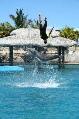 Photo of Puerto Plata Ocean World Dolphin Swim Whoops, where has everyone gone?