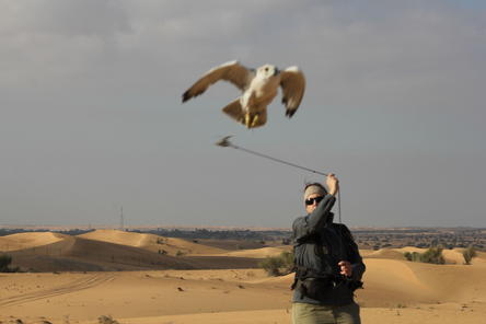 an examination of falconry in the uae There are several points of interest within the facility, including the falconry museum, hospital's examination room,  located on the uae-oman border,.