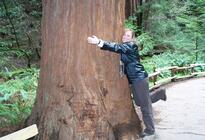 Photo of Napa & Sonoma San Francisco Supersaver: Muir Woods and Wine Country Tour
