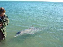 Photo of   Monkey Mia dolphin