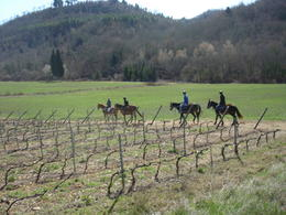 Photo of Florence Horse Riding in Chianti Day Trip from Florence Vineyard Ride