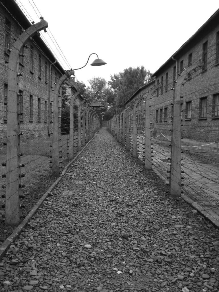 A Barbed-wire Fence at Auschwitz - Krakow