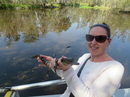 Photo of New Orleans Small-Group Bayou Airboat Ride with Transport from New Orleans Amy the alligator.
