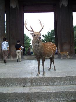 Photo of Kyoto Kyoto and Nara Day Trip from Kyoto including Nijo Castle Todaiji Guard