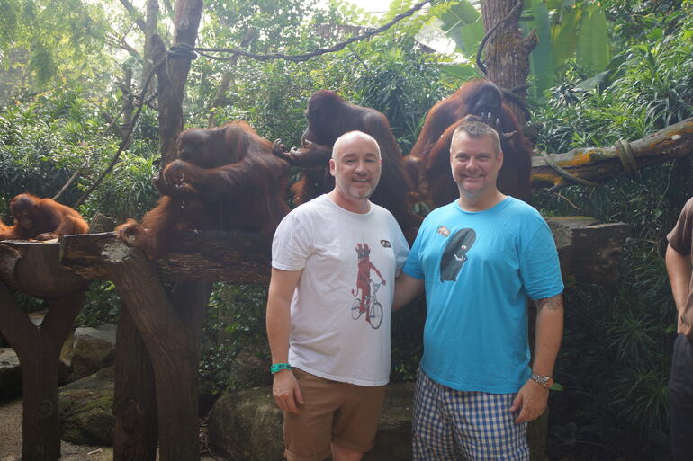 Close up with the orangutans - Singapore