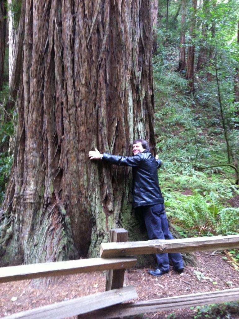 Hug a 'Sequoia' tree :-) - San Francisco