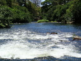 Photo of Guanacaste and Northwest Corobici River Float Tour and Las Pumas Jaguar Rescue Center Rafting